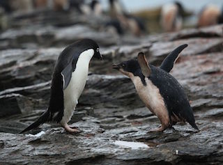 How to Learn Machine Learning, for Penguins